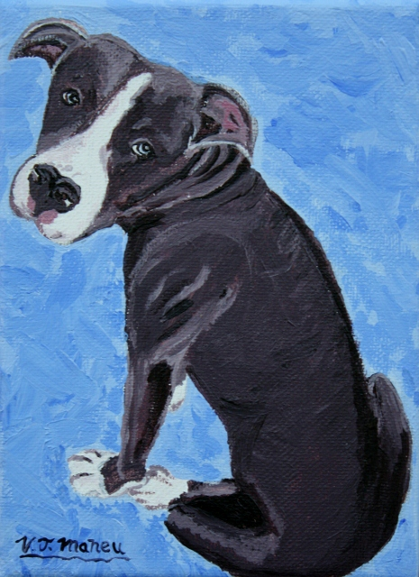 Portrait of a pitbull