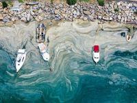 Θαλάσσια βλέννα και ρύπανση: Μια νέα ακραία απειλή για το περιβάλλον και την ζωή