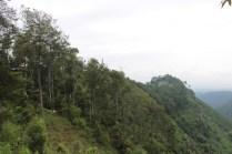 hutan tebing keraton