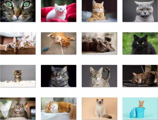 cat expressions win 10 theme