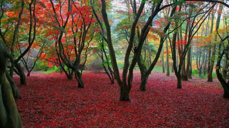 Autumn-1080p-HD-Images-Nature-768x432