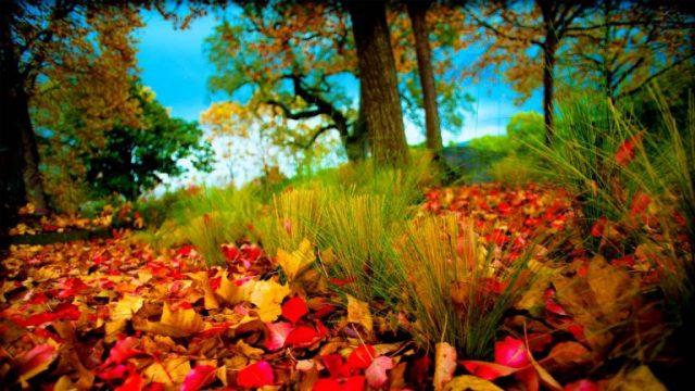 nature wallpaper HD 5