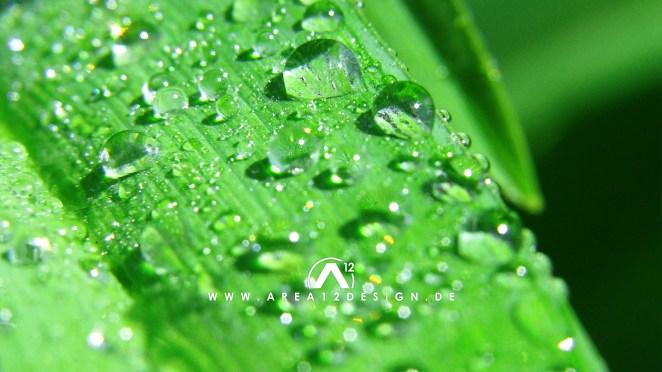 area12design_raindrops220_07