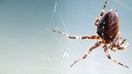 area12design_spider_2007