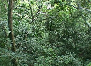 Bosque Tropical Seco