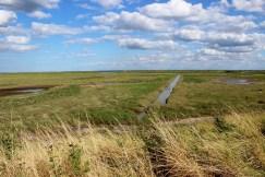 Freiston Marsh