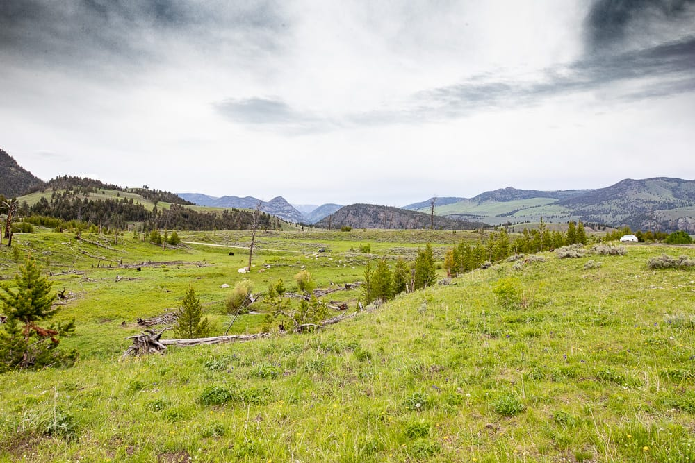 grassy meadow in yellowstone national park with mountains in the distance