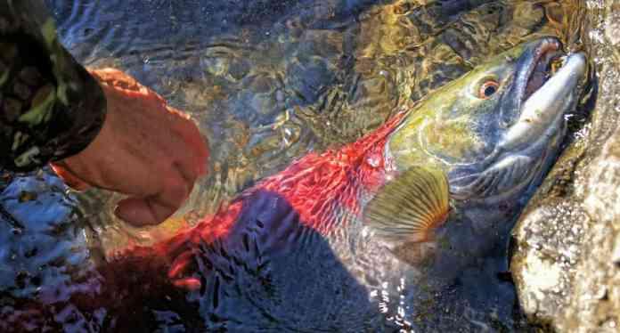 spinonews.com Omega 3 fatty acids in Fish