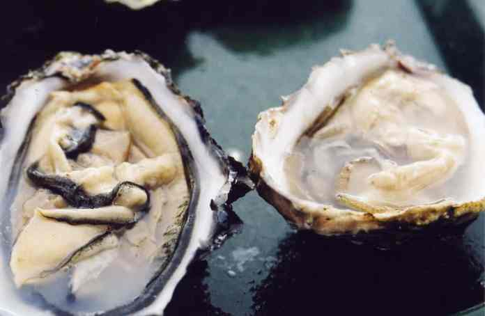 spinonews Oyster