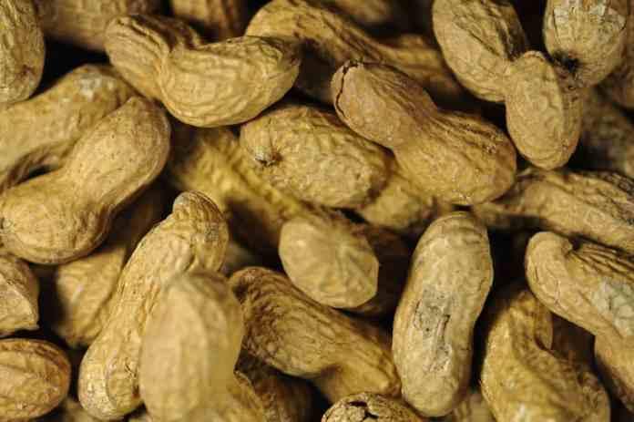 spinonews Peanut Allergies