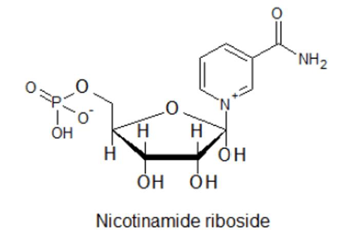 spinonews Nicotinamide Riboside