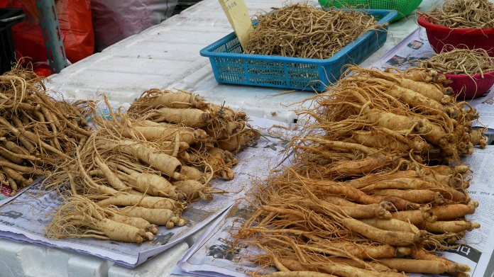 spinonews ginseng roots