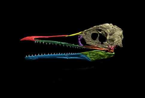 dinosaur teeth bird
