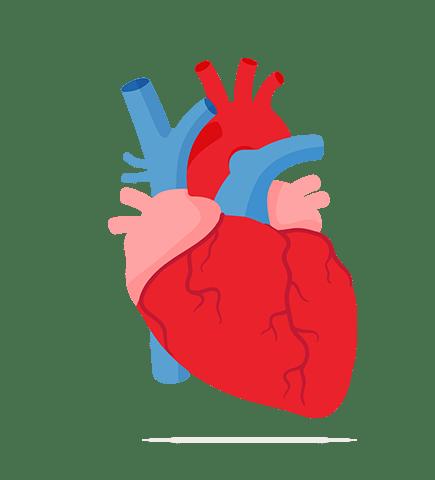 areflect Cholesterol