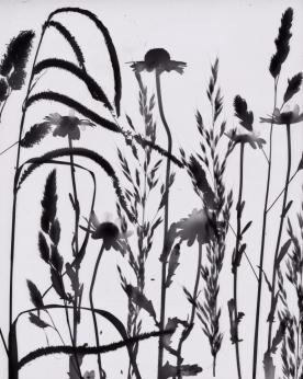 Wild Meadow Inverted Photogram, © Lisa Cullingworth, 2017