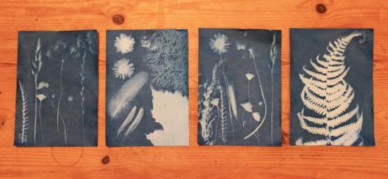 Sun Prints...