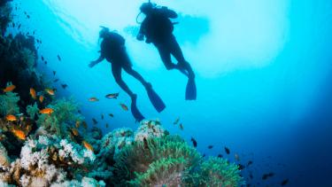 セブ島周辺のおすすめダイビングスポット4選