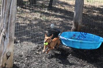 "A ""rebel dog"" takes an energetic splash in the pool."