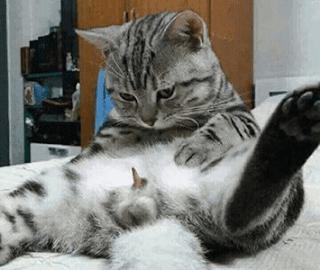 Berbicara tentang kucing, mungkin beberapa orang sulit untuk membedakan jenis kelaminnya. Gambar Perbedaan Kucing Jantan Dan Betina - 81021+ Nama ...
