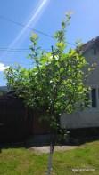 ASUS-ZenFone-Camera-Foto (3)