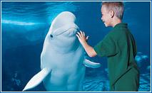 Orlando SeaWorld upclose