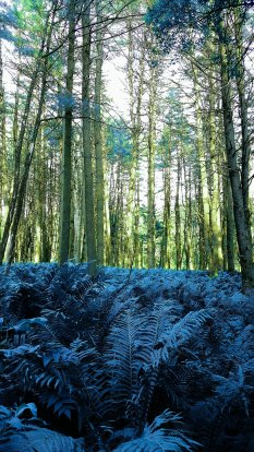 Forest of Erebus