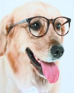 away_glassesdog