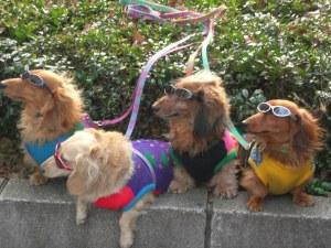 away_glassesdogs