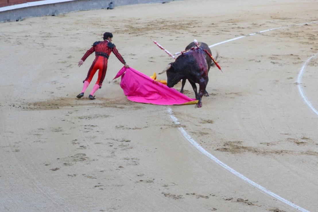 First Bullfight