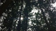 The sun through our trees