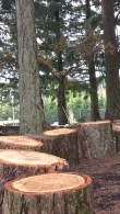 Future seats for outdoor learning and discussion