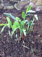 Generously donated by Lois Rutkin