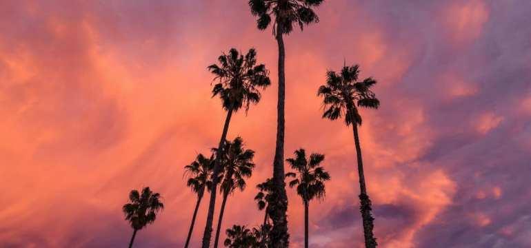 palms1-min