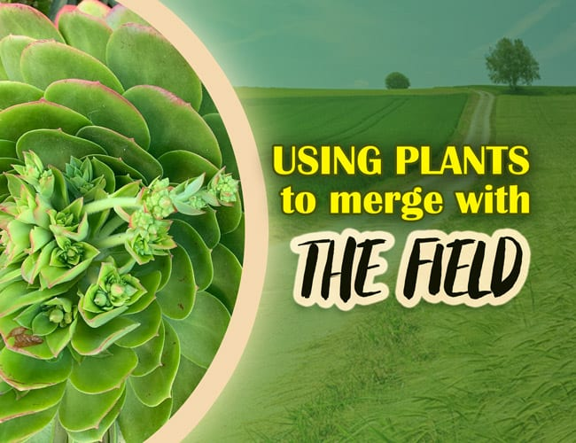 Using plants to merge with the field