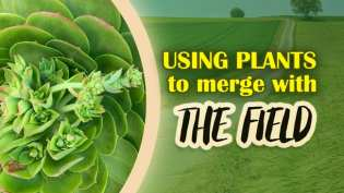 Video: Using Plants to Merge With The Field