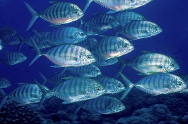 Fish:  Evolutionary Masters