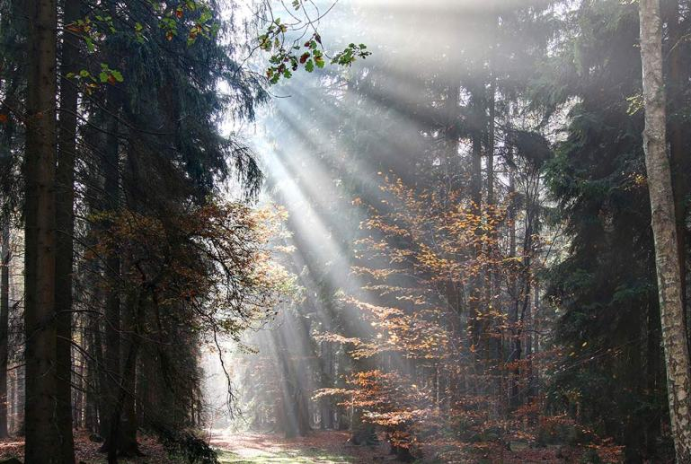 beams in forest