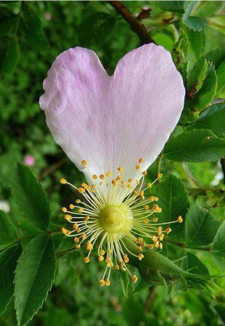 flor-petal