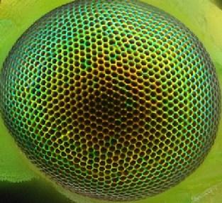 ojo-hexagonos-regulares-en-el-ojo-de-una-crisopa-verde