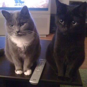 Katt, grå katt och svart katt