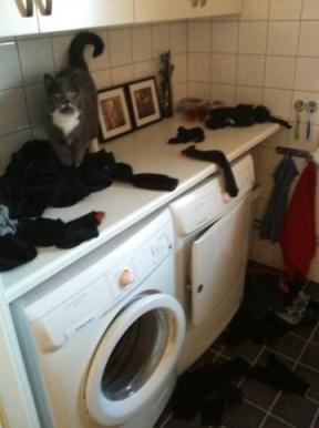 Katten har kuddkrig med alla nytvättade strumpor på bänken. Tvättmaraton.