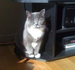 solkatt, katt sitter i solen och njuter