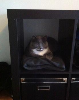 Min grå katt ligger i hyllan och sover. Bra katthylla.