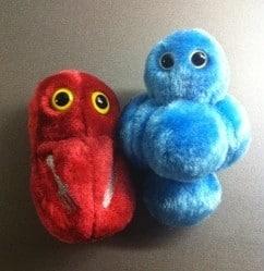 Giant microbes, en stafylokock och en köttätande bakterie