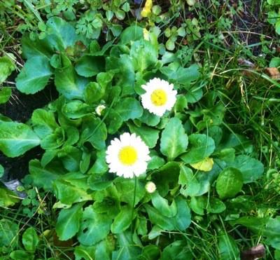Blommor i november