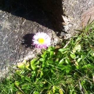 Våren är på väg! Blomma i vårsol. Däckad i förkylning.
