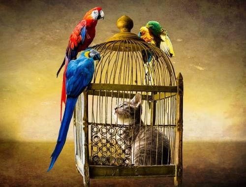 Katt i bur med papegojor