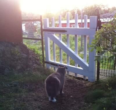 Min älskade grå katt vid grind på lantstället