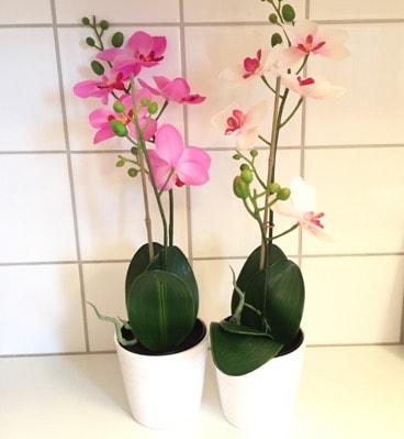 Orkidéer från Ikea, blommor