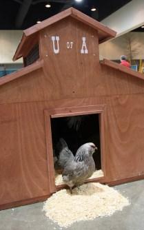2-24_AFGS_Poultry_11